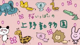 桜いっぱいの上野動物園