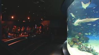ヨガ好きはもう知ってる! 究極の癒し「サンシャイン水族館で夜ヨガ!」