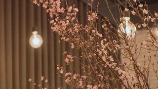 在櫻花的環繞下品味世界饕客喜愛的好味道「DINING OUT SPECIAL SHOWCASE」