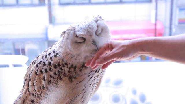 クールな魅力のフクロウや鷹と出会える「猛禽類カフェ」3選   ルトロン