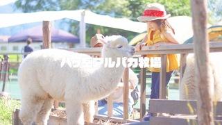 長野県「八ヶ岳アルパカ牧場」でアルパカをもふもふしよう!