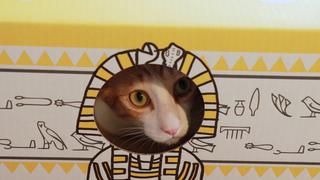 可以幫助貓咪!一瞬間讓貓咪成為俘虜的推薦商品