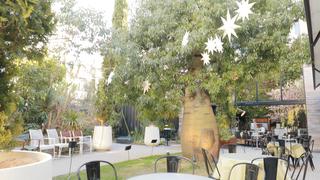 想在綠意環繞下享用假日的餐點。「代代木VILLAGE by kurkku」