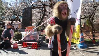 在都內感受春天氣息、「湯島天神 梅花祭」不容錯過的3個景點