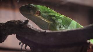 キモカワイイ♡爬虫類・両生類の動物園「iZoo」が静岡に誕生!