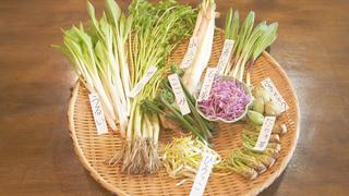 野菜如何美味的品嘗呢?來神樂坂「山塞」學習野菜料理的種類與品嚐方式