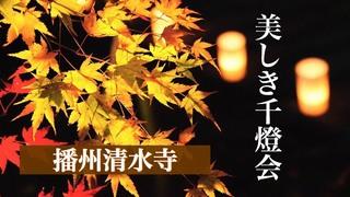 美しき千燈会!!幻想的な灯籠の世界へ@播州清水寺