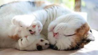 癒しの猫写真や猫グッズを手に入れよう!過去最大級の「ねこ休み展」