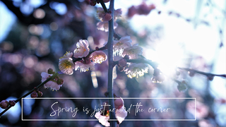 Spring is just around the corner 【東京/武蔵小金井】