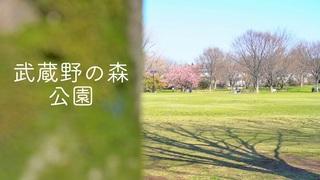 滑走路が見える公園「武蔵野の森公園」