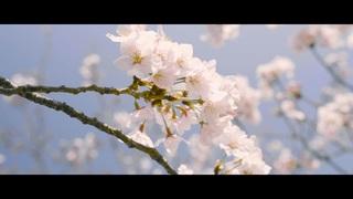 <春の黒島海浜公園>ふらっと動画制作旅