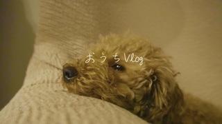 おうちVlog | 実家での過ごし方 | 犬のいる暮らし