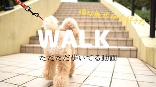 Walk ただただ歩いている動画