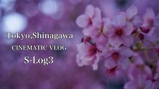 【4K】Tokyo,Shinagawa α7III PP9 S-Log3 | CINEMATIC VLOG【Japan】
