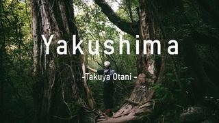 Memories from Yakushima【男5人で縄文杉に会うため屋久島へ】