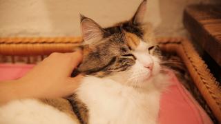 下北沢の猫カフェ「Cat Cafe Cateriam」。個性あふれる11匹の猫に癒されて