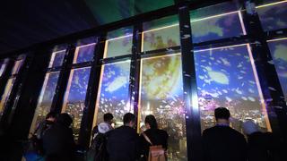 東京タワーで桜が舞う。夜景と映像が織りなす新感覚夜桜体験