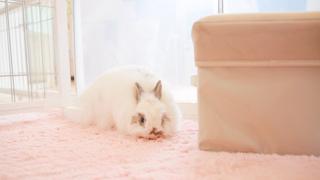 在原宿與可愛的兔子們來一場親密接觸♡ 走訪兔子咖啡廳「Ra.a.g.f」