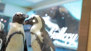 都内にここだけ!池袋「ペンギンのいるBAR」で美味しいお酒を飲みながら癒される
