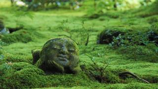 神秘的な空間で身も心も癒される! 「三千院」の苔庭とわらべ地蔵のある風景