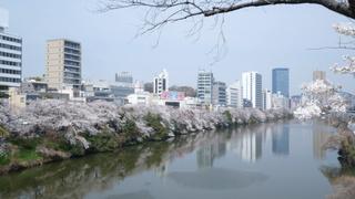 全長2kmの飯田橋「外濠公園」で愛でる桜色のトンネル