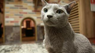 猫と仲良くなるには自分もリラックスすること!猫カフェ「きゃりこ」で猫デビュー