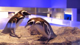 すみだ水族館の大人限定ナイトワークショップ「ペンギンワッチ」