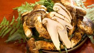 一年中松茸を楽しめる松茸料理専門店「松茸屋 銀座 魚松」