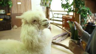 犬や猫にあの動物も!ふれあい広場「天保山アニパ」で癒される