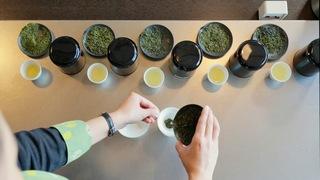 在茶葉產地靜岡「星野渡假村 界 遠州」體驗混合茶葉