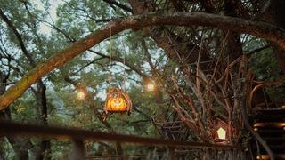 宛如秘密基地!「星野渡假村 RISONARE熱海」樹齡約300年的樹屋
