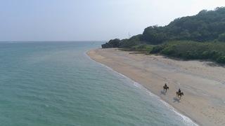 沖縄本島でヨナグニウマと遊ぶ「うみかぜホースファーム」
