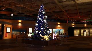 夜間夢幻水族館2016 ~漂浮在月光中的水族館~在新江之島水族館,度過浪漫的聖誕節