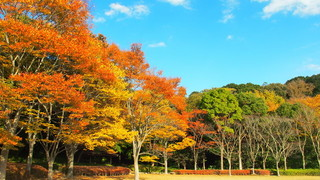 【千葉紅葉スポット】紅葉が美しい公園を巡る「21世紀の森と広場コース」