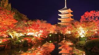 【京都紅葉スポット】文化遺産と紅葉の融合「京都駅周辺コース」