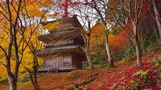 【兵庫紅葉スポット】丹波紅葉三山を巡る「高源寺コース」