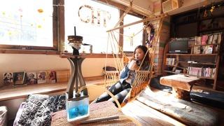 水タバコ専門店「シーシャカフェ NORTH VILLAGE the TREE 下北沢店」