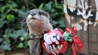 開業40周年の「サンシャイン水族館」で海のクリスマスを満喫