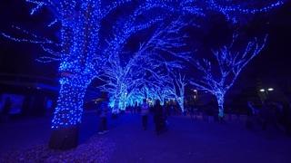「青の洞窟 SHIBUYA」全長約750mのイルミネーションに見とれる