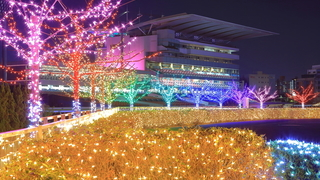 関東最大級の次世代イルミ!「東京メガイルミ」が大井競馬場に誕生