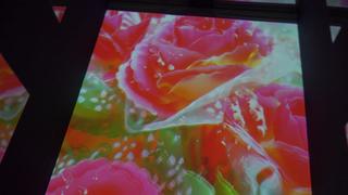 蜷川實花×「隅田水族館」感動跨界合作!見證幻想中的魚群和神秘世界觀