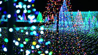 「よみうりランド」の光の庭園がスゴイ! 魅惑のイルミネーションで夜散歩