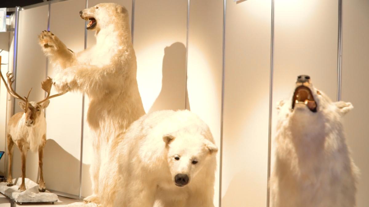 南極・北極展 〜真夏の二子玉川に氷と雪の世界がやってきた!〜