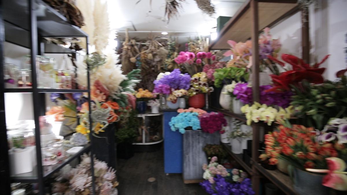 logi  plants&flowers