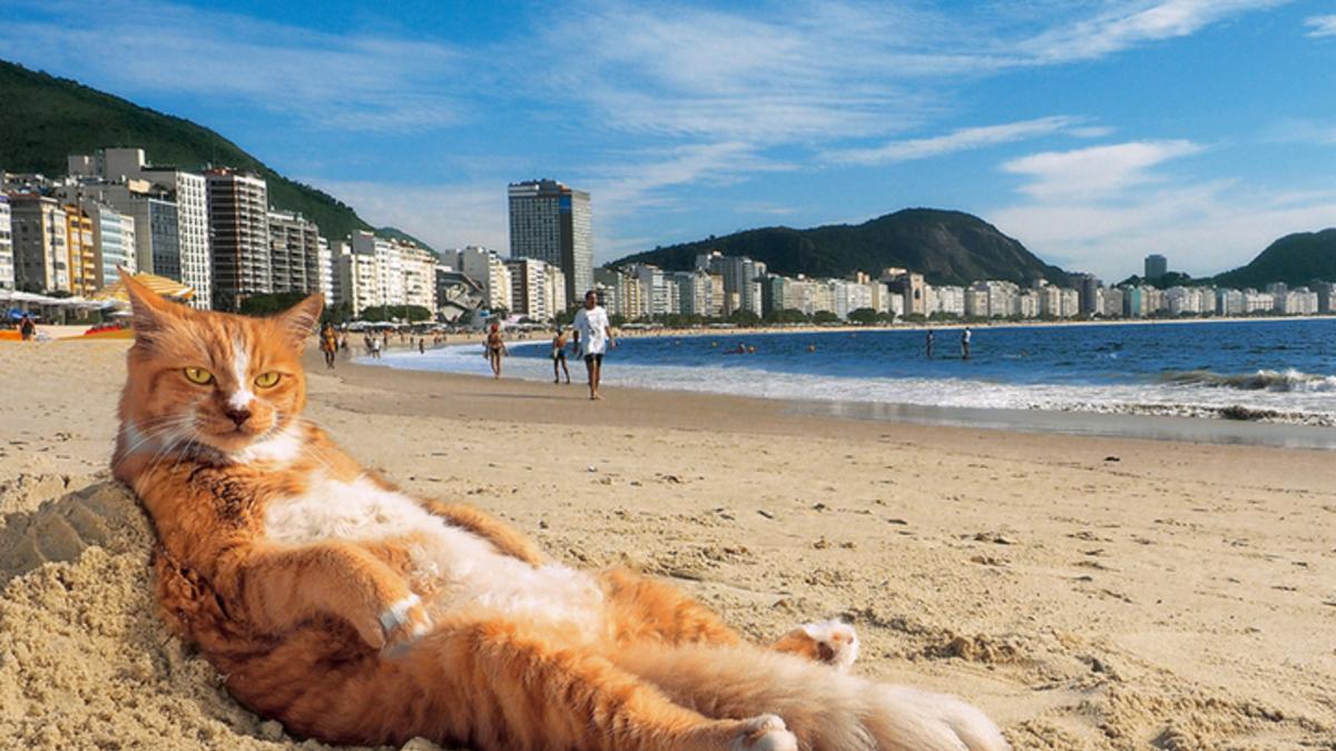 岩合光昭の世界ネコ歩き2