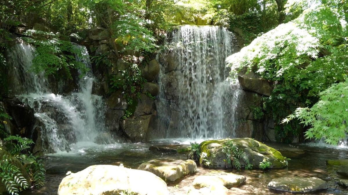企画展 「田村智久写真展 花の森八景 萌えさかる花たちを謳う」