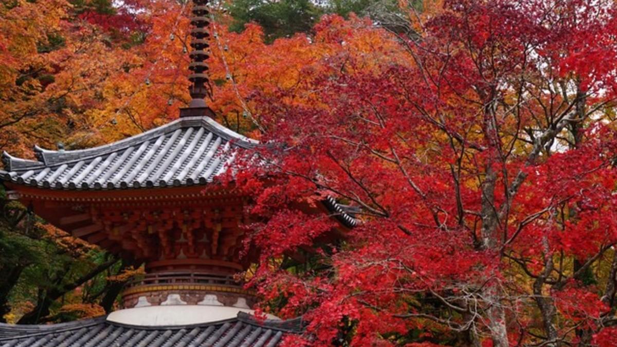 ルトロン【大阪紅葉スポット】美しい景観の山間を巡る「大威徳寺コース」