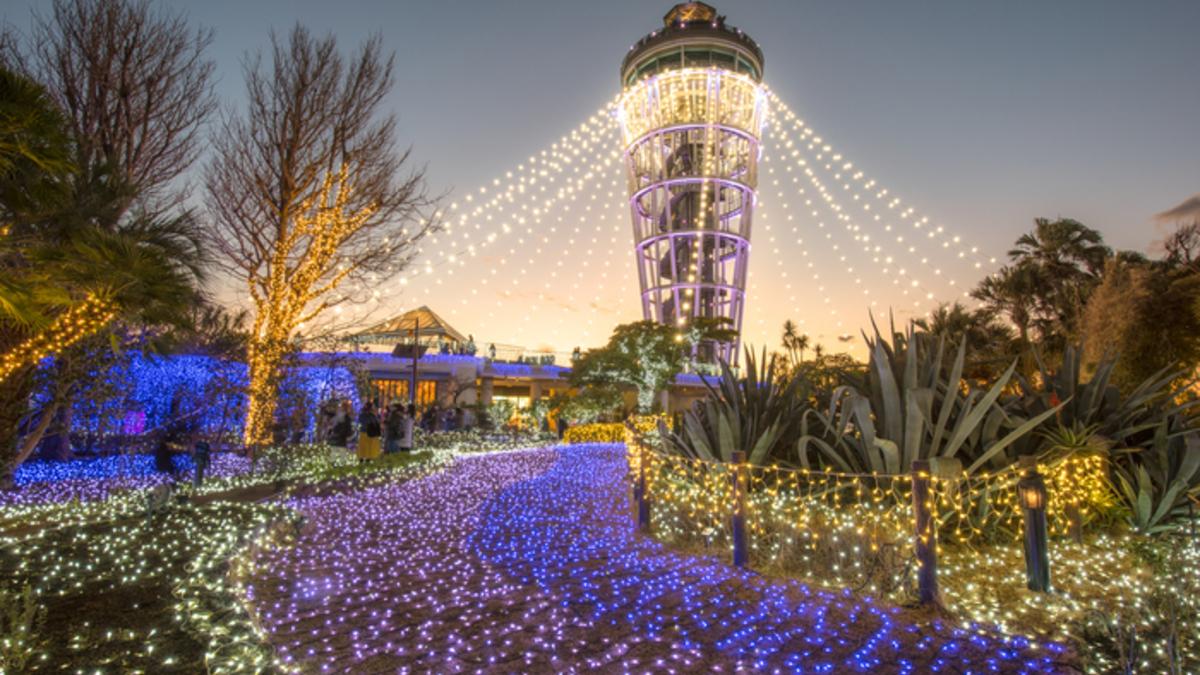 湘南の宝石 2018~2019 ~江の島を彩る光と色の祭典~