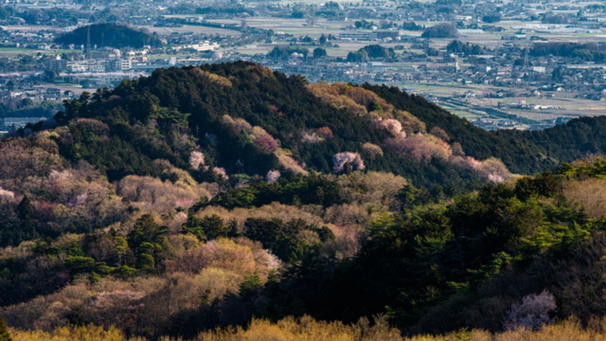 太平山見晴台