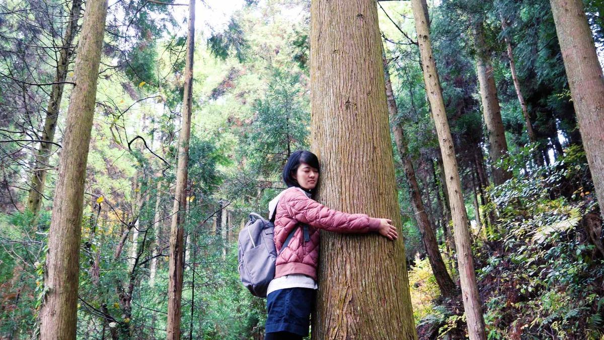 うきは市森林セラピー